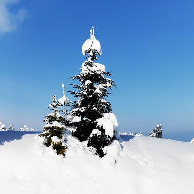 Freidorf im Schnee